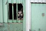 Мероприятия по отлову, вакцинации, стерилизации и возврату на прежнее место бездомных собак в Санкт-Петербурге