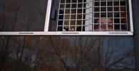 Автомобиль для перевозки заключенных, архивное фото