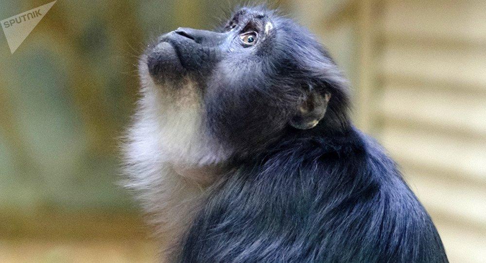 Обезьяна напала на ребенка в контактном зоопарке в Нур-Султане