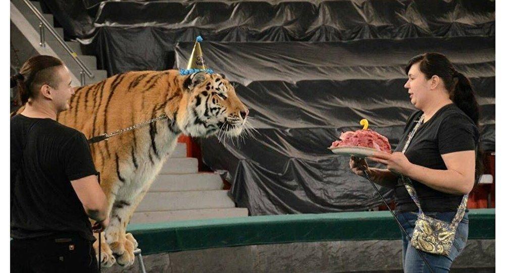 День рождения амурского тигра из России отметили в цирке Астаны