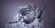 Часть самолета Ан-148 Саратовские авиалинии, разбившегося после взлета из аэропорта Домодедово в Московской области