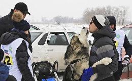Собачьи бега в Алматы