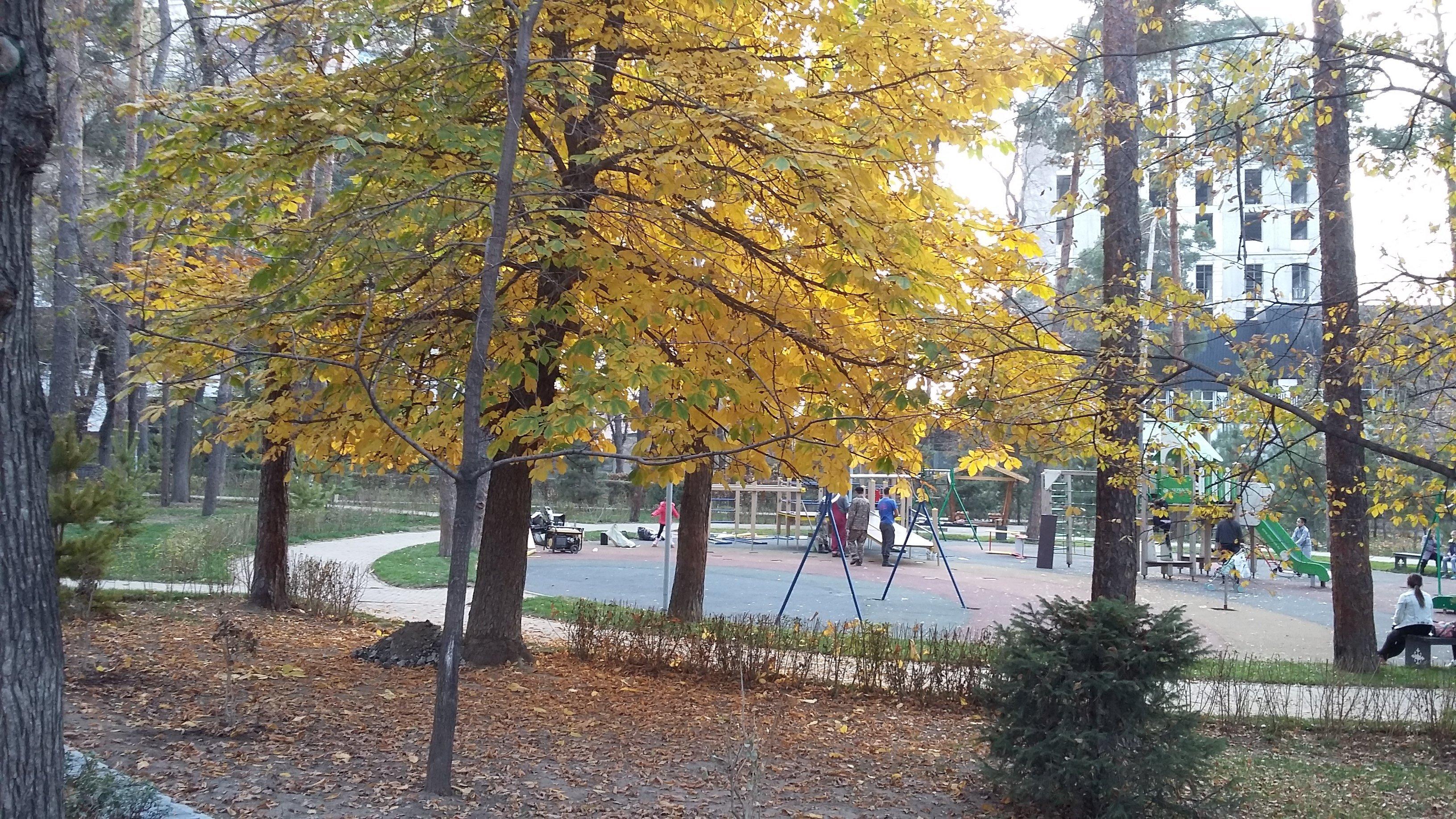 Площадка в Сосновом парке, где происходило действие в последнем эпизоде Факультета ненужных вещей