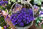 Весенний цветочный базар в Петровском Пассаже