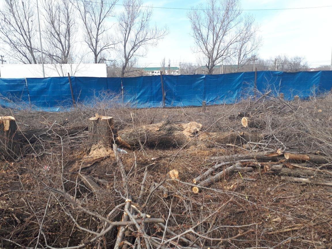 Вырубка деревьев на Илийском тракте