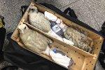 Попытка контрабандного вывоза сокола в ОАЭ