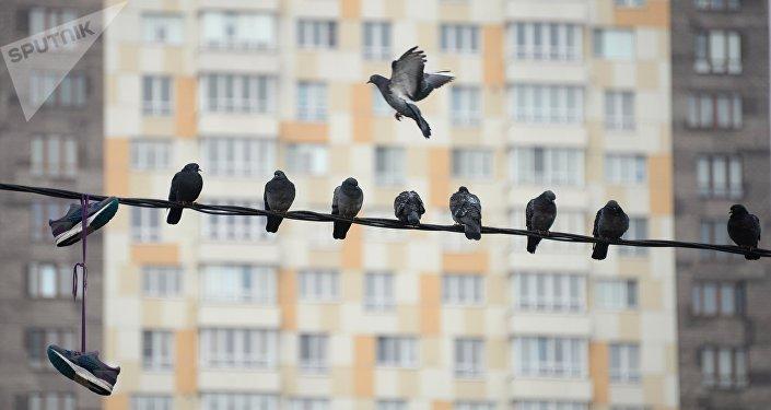 Голуби сидят на проводах
