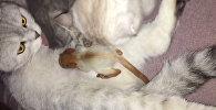 Алматыда мысық жаңа туған тиінді бауырына басты - видео