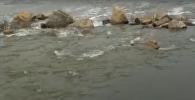 Вода заливает трассу между Казахстаном и Россией в Костанайской области