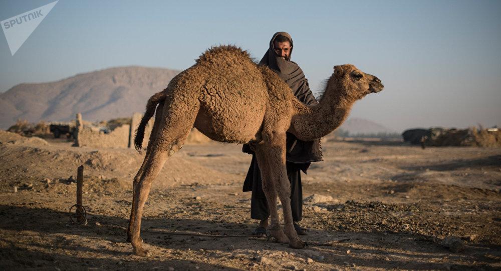Страны мира. Афганистан