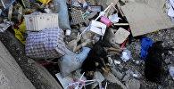 Мертвые собаки на стихийной свалке в Уральске