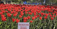 Фестиваль тюльпанов