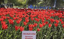 Фестиваль тюльпанов - сорт Президент Назарбаев, архивное фото
