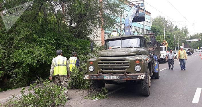 Деревья упали на прохожего и припаркованный автомобиль