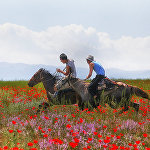 Маки в горах близ Алматы