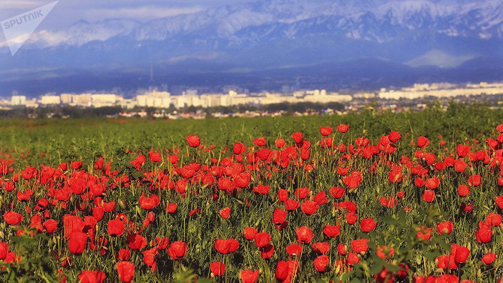 художник приступает казахстан фото цветущие поля казахстана погрузились
