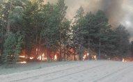 Лесной пожар в Семее