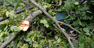 Ветки сломанного дерева