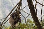 табиғи қорықтан панданың қонжығы табылды