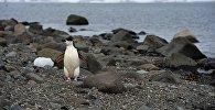 Антарктида, архивтегі фото