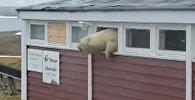 Медведь застрял в оконном проеме