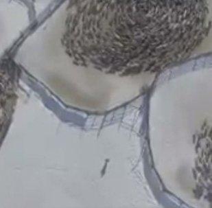 Кружение оленей