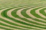 Круги на летнем поле, иллюстративное фото