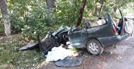 Причиной смертельной аварии стало упавшее дерево