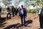 Нурсултан Назарбаев сажает деревья во время посещения Зеленого пояса вокруг Астаны