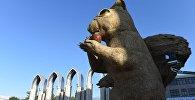Гигантская белка в Алматы