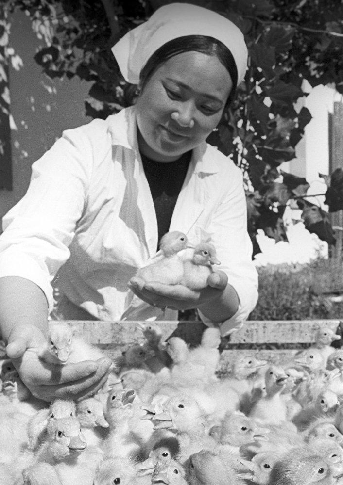 Оператор инкубатора колхоза 40 лет Октября Талды-Курганской области Казахской ССР Роза Тумбаева.