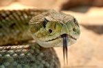 Змея, иллюстративное фото