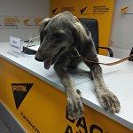 Видеомост с участием собаководов Бишкека, Еревана и Астаны