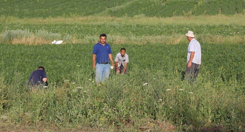 Ақниет ауылының тұрғындары егіс алқабында жүр