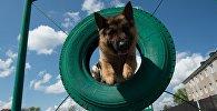 Собака в кинологическом центре, архивное фото