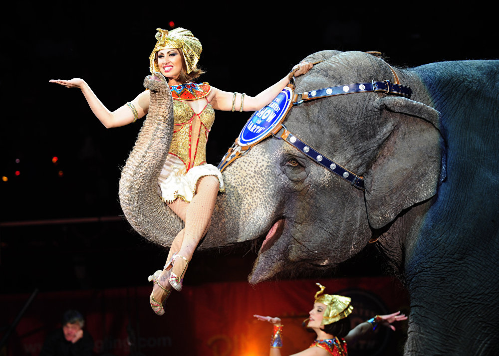 дочернее картинки артисты цирка животные также можете указать