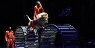 Цирк, архивтегі фото
