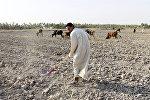 Мужчина на поле, пострадавшем от засухи, в регионе Мишхаб (Ирак)