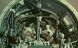 Белка и Стрелка совершили космический полёт на корабле Спутник-5 19 августа 1960 года