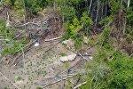 Племя из джунглей попало на видео