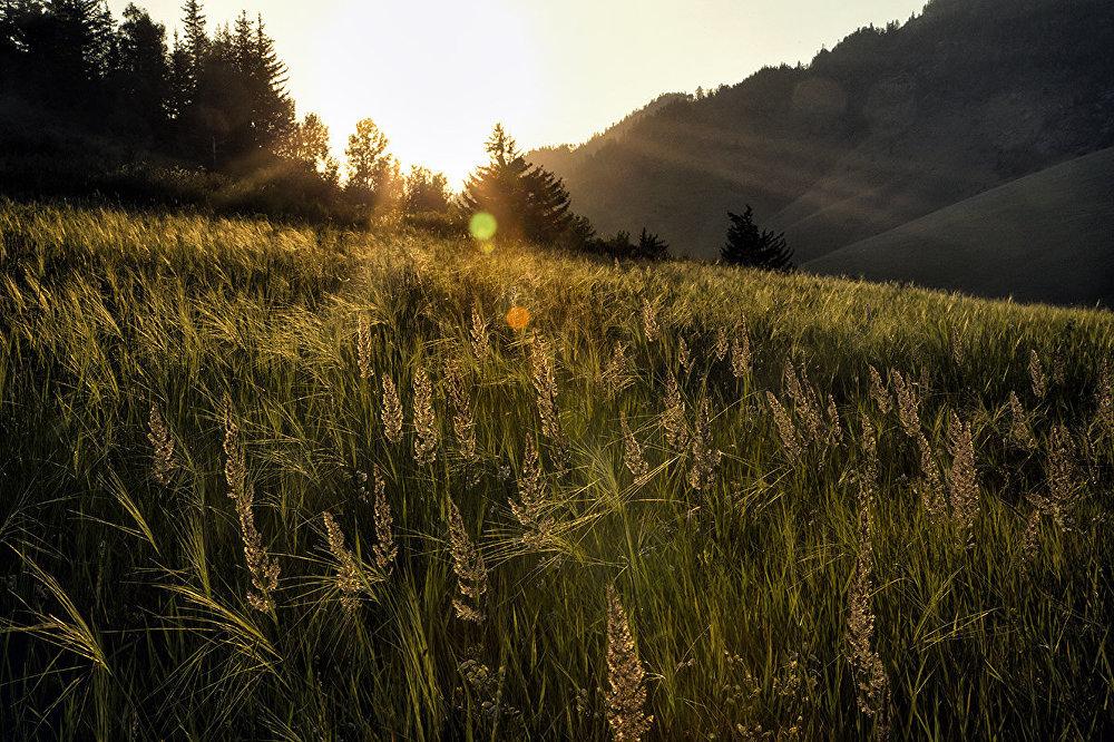 Природа Восточного Казахстана