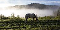 Шығыс Қазақстан облысы. Жайылымдағы жылқы