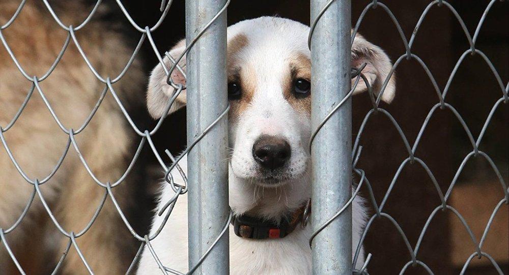 Собака в вольере, архивное фото