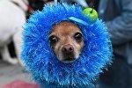Парад собак в парке Красная пресня