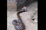 Мальчик играет с гигантской змеей