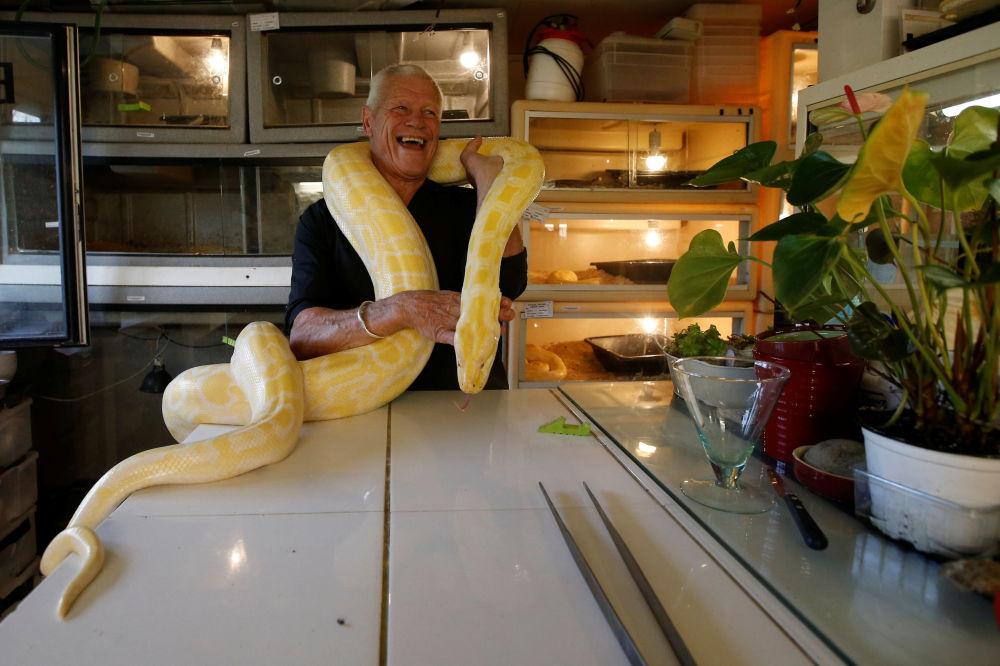 67-летний любитель рептилий Филипп Жилле с питоном у себя дома во французском городе Куэрон
