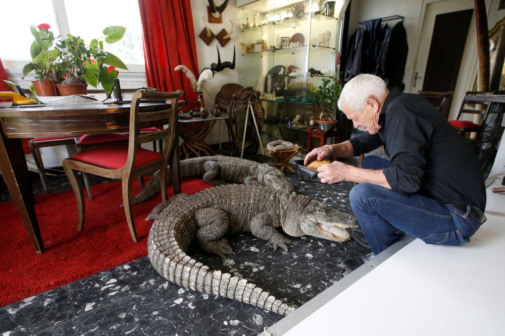 67-летний любитель рептилий Филипп Жилле с крокодилами у себя дома во французском городе Куэрон