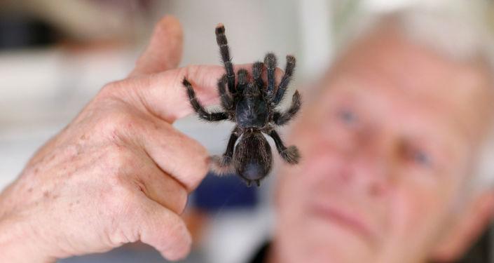67-летний любитель рептилий Филипп Жийе с ручным тарантулом у себя дома во французском городе Куэрон