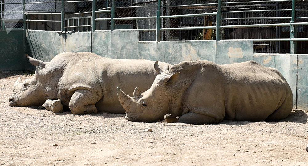 Носорог в Алматинском зоопарке, архивное фото