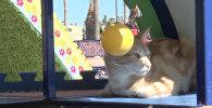 Мяу-парк для бездомных кошек в Турции